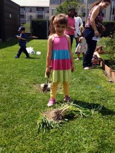 Harvesting scallions at the Squirrel Hill branch, August 2014